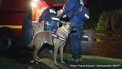 https://www.30millionsdamis.fr/fileadmin/_processed_/5/7/csm_CHIENS_POLICIERS_7d1c754401.jpg