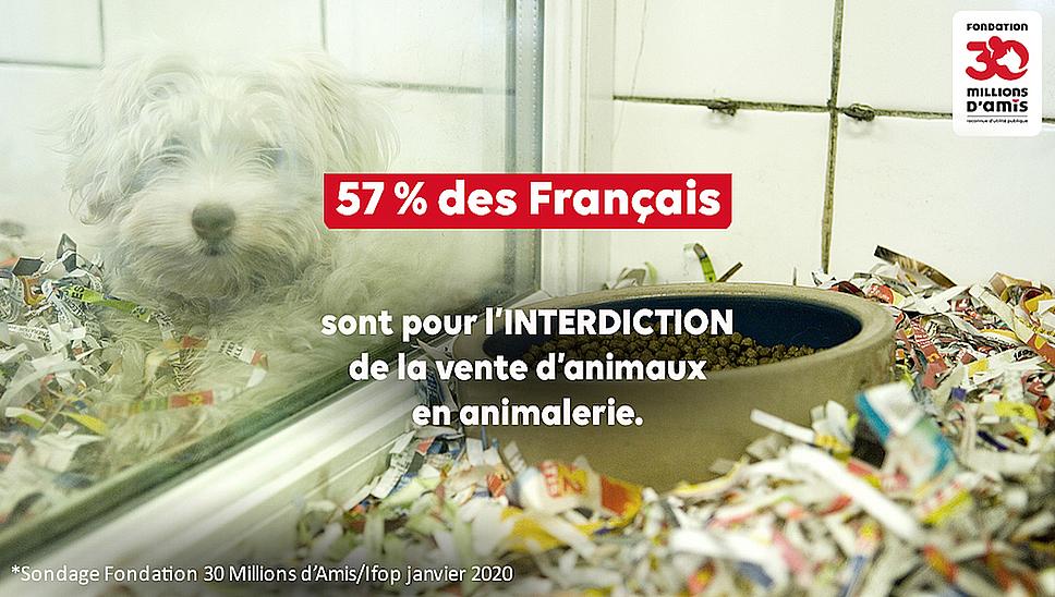 The End L Angleterre Met Fin A La Vente De Chiens Et Chats En Animalerie Fondation 30 Millions D Amis