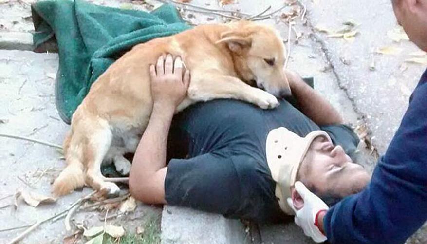Le chien Tony est resté auprès de son maître, tombé d'un arbre. © Facebook Defensa Civil Bahia Blanca