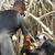 Ils sont nourris 2 fois par jour par le personnel du refuge. © Help Congo