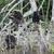 22 chimpanzés sont nourris sur les îles de Conkouati. © Help Congo
