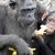 Petits et grands se régalent de fruits. © Help Congo