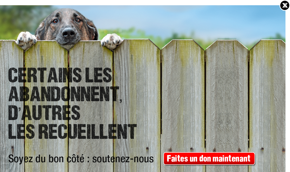http://www.30millionsdamis.fr/fileadmin/templates/v1/prehomes/prehome-juin-2013/prehome-campagne-2013.png