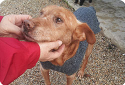 Un chien perd un oeil, plainte de la Fondation