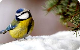 http://www.30millionsdamis.fr/fileadmin/user_upload/actu/0111/actu-interieur-oiseaux.jpg