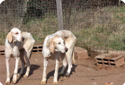 La Fondation 30 Millions d'Amis recueille 11 chiens