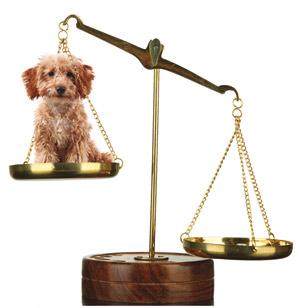 Pétition : pour le changement du statut juridique de l'animal Statut3-actu