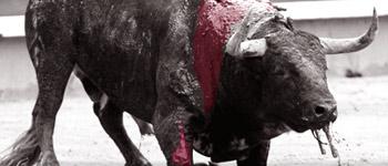 Tauromachie !!!!! inacceptable : signez la pétition dans animaux-sauvetage-barbarie animale-divers petition-corrida2