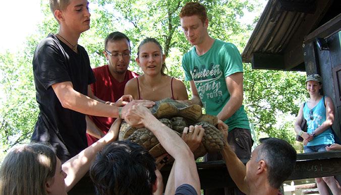 Il faut être à plusieurs pour charger les tortues dans les cages de transport. © Village des Tortues de Gonfaron