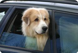 L'arrivée du chien : les bons réflexes