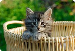 L'arrivée du chat : les bons réflexes
