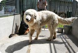 Le refuge a retiré 2 chiennes et participé au retrait de chevaux Chien-dordogne-actu