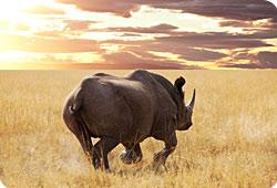 Les animaux, grands oubliés des conférences mondiales ?