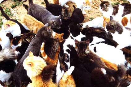 Brûlés, dépecés par des chiens ou assomés contre des piliers en béton, les chats d'Olivet ont été massacrés