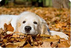 L'automne, des tracas pour les chiens et les chats