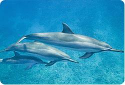 Marseille : trois dauphins attachés à un bloc de béton