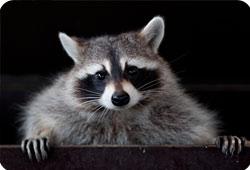 Pays-Bas : la Fondation soutient un sanctuaire pour animaux sauvages