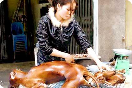 Loi - Chine : plus de chien dans les assiettes ?