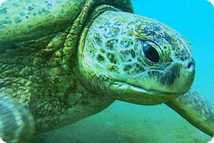 Des tortues marines brûlées vives