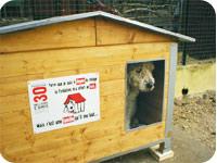 Plus de 2 000 chiens âgés ont été adoptés grâce à l'opération Doyen