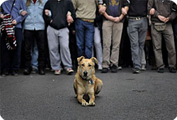 Un chien désigné