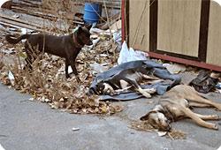 La Fondation au secours des chiens errants d'Ukraine