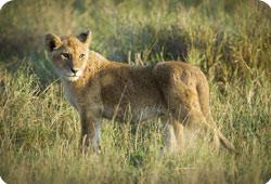 Le Botswana met fin aux aux chasses en boîte
