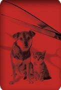 Nouvelle pétition contre la fourrure