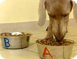 chien qui mange